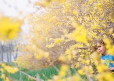 Art and ArtistryMay 14, 2015 in the forsythia By Cate Wnek