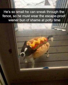 33 Hot Doggy Dog Memes To Help You Feel All Warm And Fuzzy Inside - World's largest collection of cat memes and other animals Funny Animal Memes, Cute Funny Animals, Funny Cute, Funny Dogs, Funny Kitties, Funny Horses, Adorable Kittens, Animal Quotes, Kitty Cats
