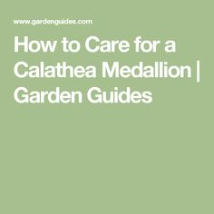 How to Care for a Calathea Medallion | Garden Guides