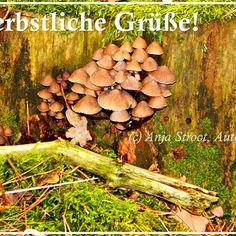 #herbst #herbstwald #Pilze #anjastroot #Lesen #Bücher #Lesewetter #Autor > Beitrag darf gerne geteilt werden < Manchmal muss man den Kopf wieder frei bekommen für neue #Ideen. Was wäre da besser geeignet, als ein schöner Spaziergang durch den Herbstwald. Dank meiner Camera konnte ich dieses schöne Bild für euch aufnehmen. In diesem Sinne herbstliche Grüße Anja Stroot, Autorin  Schaut doch mal auf meiner Homepage www.anjastroot.jimdo.com vorbei oder bei Facebook, Twitter, Pinterest…