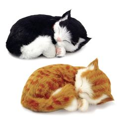 """Great starter pet for small kids, these kitties """"breathe"""" as they sleep!"""