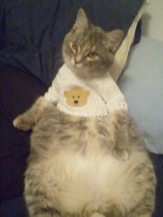 Athena, my fat cat, in a sweater.
