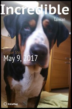Tone auf InstaMag Anton, Big Dogs, Taiwan, The Incredibles, Boys, Animals, Pet Dogs, Baby Boys, Animales