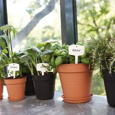 Elho Green Basics Facile Cintre Grandes Feuilles Vert Fleur Plante de jardin pot