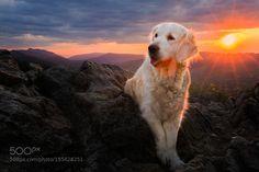 Heaven? by IzaLysonArts #animals #animal #pet #pets #animales #animallovers #photooftheday #amazing #picoftheday