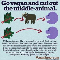 """1,233 Likes, 19 Comments - CEO of @vegancommunity 🌎🇻🇪 (@araujocesar) on Instagram: """"Go Vegan! ★★★ ★★ ★ #vegan #Vegancommunity #rpvegancommunity #govegan #peta #pet #yoga #like…"""""""