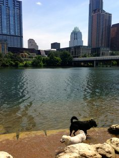 The Best Austin Watering Holes to Visit with Your Dog This Summer  | Apartments.com