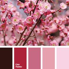brown color, color combination for spring, color palette for spring, dark pink, delicate shades of cherry blossoms, maroon color, pastel shades of cherry blossom, pink color