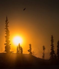 Off the net Crying Eyes, O Canada, Sunrise, Scenery, Nature, Outdoor, Heart, Pretty, Outdoors