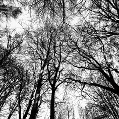 Trees is a creation by Laurent Orseau. Category Nature, Vegetal, Tree, forest, Photography, Digital. EOS 6D. 37 points, 13 appreciations, 1 comment, 0 favourite,…