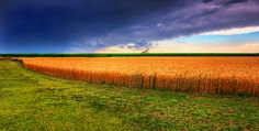 Enjoy the waning days of summer with your facial hair...there's still time for one last corn on the cob.  Photo Information: Kansas Summer Wheat and Storm Panorama (Credit: James Watkins)