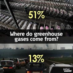 51% of greenhouses gases come from animal agriculture #vegan