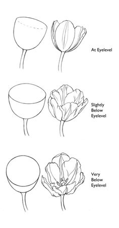 One of the most important aspects about drawing is training your eye to recognize the level that you are looking at something. All too often we don't pay enough attention to the height of a s… drawing tutorial Zeichnungen Flower Art Drawing, Flower Drawing Tutorials, Flower Sketches, Floral Drawing, Art Tutorials, Painting & Drawing, Flower Drawings, Peony Drawing, Drawing Eyes