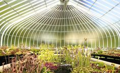 Inside the Botanic Gardens in the west end of Glasgow, Scotland.