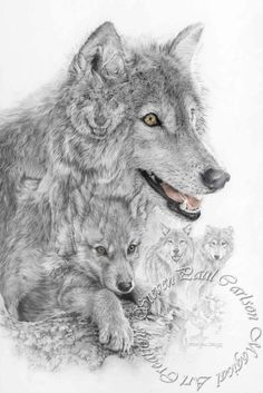 The Grey Wolf of the Americas - The Recovery  by Steven Paul Carlson on ARTwanted