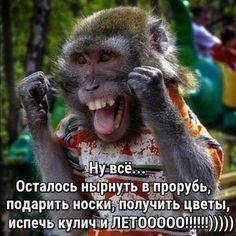ЗИМНЯЯ ВИШНЯ   OK.RU