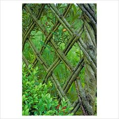 Living willow fence - image only. Seems so rustic, artful & precise to me.
