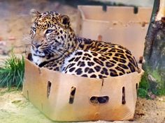 Cats love boxes.