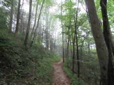 Hikertrash 900: West Prong, Bote Mountain and Crib Gap Trails