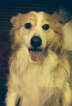My lovely Lulu