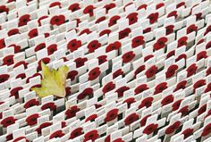 A leaf lies on crosses and poppies in the Field of Remembrance outside Westminster Abbey in London. The Field of Remembrance pays tribute to those who have died while serving in Britain's armed forces.