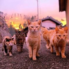 They look like they just burned down the homes of their enemies and are coming for you! LOL!