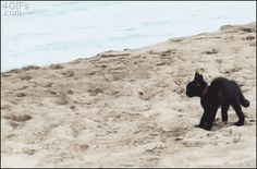 Kitty tries to scare the ocean