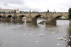 Charles bridge is the oldest bridge in Prague