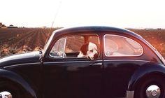#VW pup