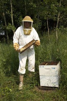 cuidado de abejas