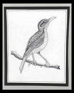 Bird on a Branch - Pen Drawing