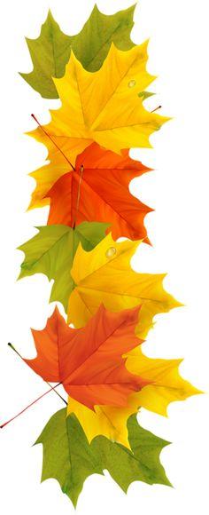 View album on Yandex. Fall Clip Art, Pressed Leaves, Autumn Scenery, Beautiful Nature Wallpaper, Fall Wallpaper, Watercolor Leaves, Happy Fall, Fall Season, Fall Crafts