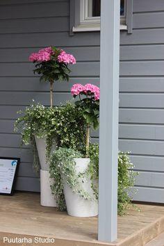 Terassikukkia Kalajoen Loma-asuntomessuilta   Asuntomessut Patio, Plants, Plant, Planets, Terrace