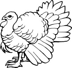 The Big Wild Turkey Coloring Pages