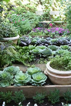 Decorative but edible cabbages, herbs, tomatoes etcetera