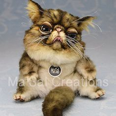 Ma'Sal original Special Dolly Kitten-Exotic short hair / Direct from the Artist