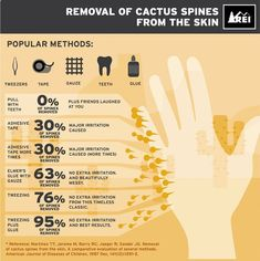 How to Remove Cactus Spines From Skin | Safe and Effective Tricks For Cactus Needles Removal by Pioneer Settler at pioneersettler.co...