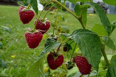 My Secret Garden, Garden Gates, Flora, Fruit, Vegetables, Plants, Sad, Gardening, Compost