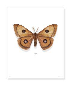Smukke kvalitetsprint med danske sommerfugle