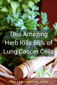This amazing herbs kills 86% of lung cancer cells