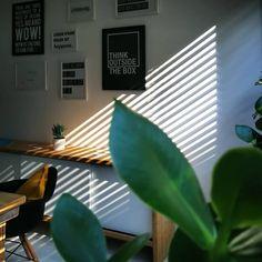 Heute morgen haben wir ja fast gefroren! 😜 Aber es gibt dennoch genügend Sonnenstrahlen, herrlich! ☀️👒... #WEBMARKETIERE  #agenturalltag #agenturleben #agentur #gallerywall #bürogrün #sommerimbüro #sukkulentenliebe #oldenburg #unseroldenburg #onlinemarketing #digitalmarketing #internetagentur #werbeagentur #agency #agencylife  #Regram via @webmarketiere Oldenburg, Plant Leaves, Plants, Advertising Agency, Sun Rays, Today Morning, Spot Lights, Animals, Plant