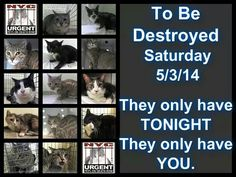 NYCACC DEATHROW CATS