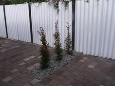 The finished garden bed on left of original pic - planted to help hide the clothesline from the outdoor dining area - Australian plant Eugenia ventenati - great quick growing screening