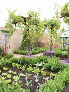 Edible Landscaping - Grow Food Everywhere: Ground Covers, Fruit-Bearing Trees and More - Gardening - Mother Earth Living Fruit Bearing Trees, Fruit Trees, Potager Garden, Dream Garden, Garden Fun, Edible Garden, Garden Spaces, Xeriscaping, Growing Vegetables