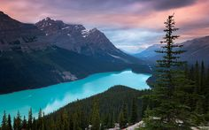 Peyto Lake Canada Mountains Wallpaper, HD Nature Wallpapers, Images, Photos and Background Tree Wallpaper, Nature Wallpaper, Wallpaper Windows 10, 1080p Wallpaper, Wallpaper Pictures, Computer Wallpaper, Photo Wallpaper, Banff National Park, Landscape Photography