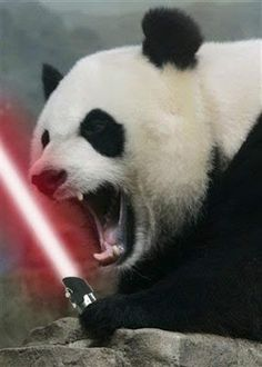 Wing Chun Bear with Lightsabers