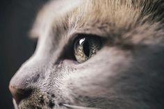 20 удивителни снимки на котки | High View Art