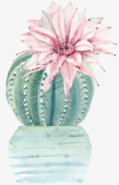 cactus flower blooms at night Cactus Painting, Watercolor Cactus, Cactus Art, Cactus Flower, Watercolor Paintings, Cactus Water, Cactus Decor, Image Cactus, Cute Wallpapers