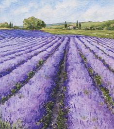 Painting Lavender at Summerhill