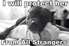 OMG that pitbull is SO vicious! Smh...GTFOH! Pits are the best babysitters! #pitbulllover